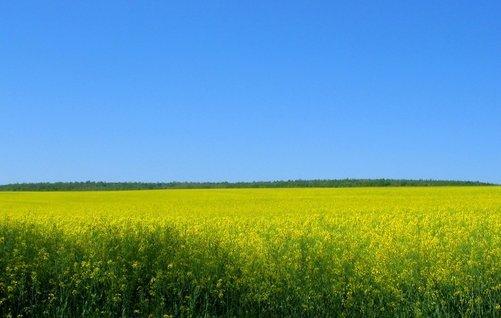 Biotreibstoff beim Fahren – Die Vor- und Nachteile